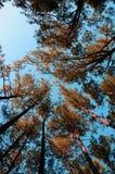 Utsträckta skogar Arkivbild