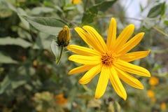 Utstråla blomman Arkivbild