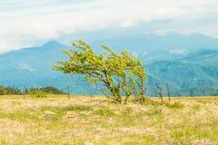 Utsukushigahara公园美好的风景视图是一个  图库摄影