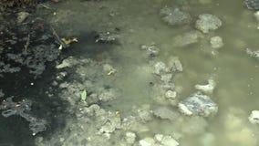Uttag för avloppsvattenavrinningrör som flödar in i floodplainskogen stock video
