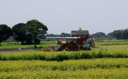Uttaradit, Ταϊλάνδη, 18.2018 Μαΐου: Το όχημα γεωργίας συγκομίζει το ρύζι στον τομέα ρυζιού στην επαρχία Uttaradit στοκ φωτογραφία