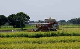 Uttaradit, Tailândia, maio 18,2018: O veículo da agricultura está colhendo o arroz no campo do arroz na província de Uttaradit Fotografia de Stock