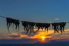 Uttorkningbläckfisk royaltyfri foto