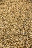 Uttorkningjordnötter Arkivfoton