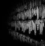 Uttorkningstockfis på Lofotenen Arkivfoto