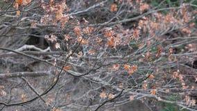 Uttorkningträd i höst stock video