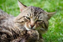 uttråkad katt Arkivbild
