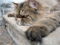 uttråkad katt Arkivfoton