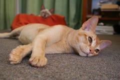 uttråkad kattunge arkivbilder