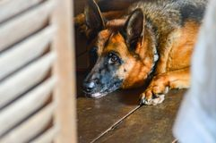 Uttryck av en hund royaltyfria foton
