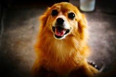 Uttryck av en hund royaltyfri bild