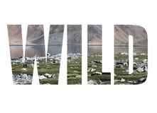 Uttrycka den LÖSA over steniga kusten av Bulunkul sjön i bergen Royaltyfria Foton