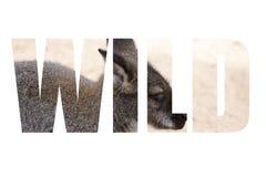 Uttrycka LÖSA over kängurur på sandbakgrund i zoo Royaltyfri Fotografi