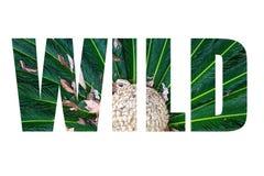 Uttrycka LÖSA over sidor av den bästa sikten för palmträdet som är liknande till påfågel f Arkivbilder