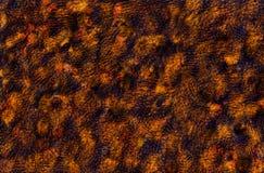 Uttrycksfull abstrakt textur Royaltyfri Foto