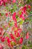 Utumn颜色、红色和绿色叶子 免版税库存图片