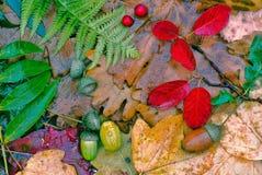 Utumn bladeren Ð  na regen Royalty-vrije Stock Afbeeldingen