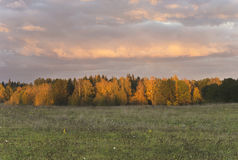Utumn landscape with golden trees at night, Lithuania, Riese district. Golden trees at cold autumn night Royalty Free Stock Photography