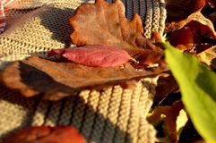 Аutumn leaves. Autumn leaves fallen from the trees in the park Royalty Free Stock Photo