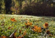 Utumnbladeren, gras met dalingen in de ochtend Stock Afbeeldingen