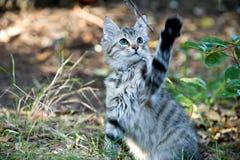 utvändig leka stående för gullig kattunge Arkivfoto