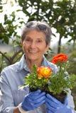 Utvändigt arbeta i trädgården för hög kvinna Fotografering för Bildbyråer