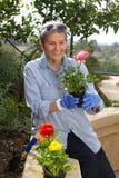 Utvändigt arbeta i trädgården för hög kvinna Arkivbild
