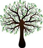 Utvecklingsträd av en trädgräsplandollar Arkivfoto