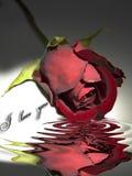 utöver rött rose vatten Royaltyfri Bild