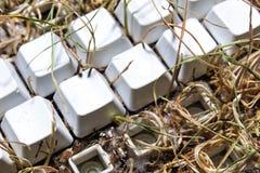utvidgar tangentbordet naturligt Fotografering för Bildbyråer