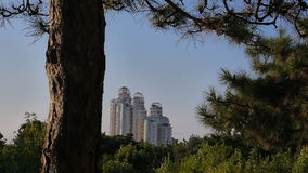 UUban park trees. city skyline skyscrapers. modern buildings landmark. Urban park trees. city skyline skyscrapers. modern buildings landmark far away stock footage