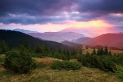 UUnder de purpere die hemel bepaalt bergheuvels met kruipende pijnbomen worden behandeld Royalty-vrije Stock Foto