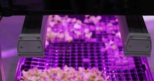 UV αυξηθείτε τα φω'τα για την ανάπτυξη των εγκαταστάσεων Hydroponics φυτικό αγρόκτημα Φω'τα οδηγήσεων επάνω για την ανάπτυξη των  φιλμ μικρού μήκους