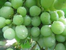 A uva é um tipo de fruto que cresce nos grupos imagem de stock royalty free