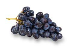 Uva azul Imagem de Stock
