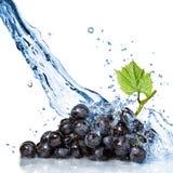 Uva azul com água Foto de Stock Royalty Free