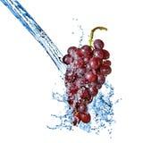 Uva azul con el chapoteo del agua aislado Imagen de archivo libre de regalías