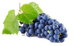 A uva azul frutifica com as folhas isoladas no branco fotografia de stock
