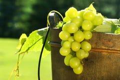 Uva in benna di vino fotografia stock
