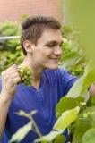 Uva bianca di bello raccolto adolescente immagine stock libera da diritti