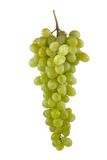Uva blanca_8259. Bunch of grapes on a white background stock images