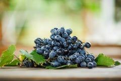 Uva blu scuro matura deliziosa con le foglie verdi su una tavola di legno fotografie stock
