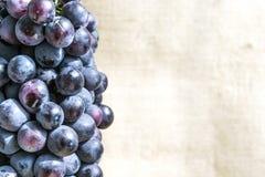 Uva blu succosa fotografia stock