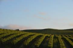 A uva coloca Napa Valley na maneira a Santa Rosa Fotografia de Stock