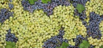 Uva con las hojas Foto de archivo libre de regalías