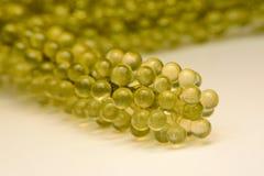 Uva del mare o frutti di mare sani dell'alga più cavier verde Mare ovale gr Immagini Stock