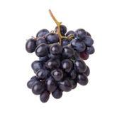 Uva del vino rosso Fotografia Stock