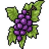 Uva di arte del pixel di vettore illustrazione vettoriale