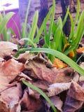 Uva di autunno Immagini Stock