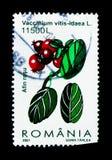 Uva di monte (vaccinium vitis idaea), serie delle bacche, circa 2001 Fotografia Stock